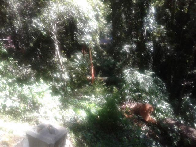 0 Cathedral Drive, Aptos CA: http://media.crmls.org/mediaz/3823536E-D229-407E-864E-F1C98A894725.jpg