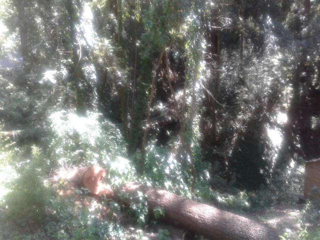 0 Cathedral Drive, Aptos CA: http://media.crmls.org/mediaz/70FA51EB-7CCD-448C-AD73-07A021FAFCDC.jpg