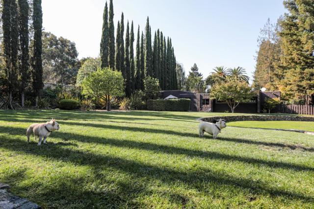 186 Alameda De Las Pulgas, Atherton CA: http://media.crmls.org/mediaz/B9086CEE-53AC-4AFD-8B73-EBED6A49EFC8.jpg
