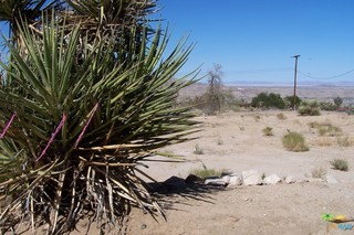 Photo of home for sale at 60956 NAVAJO Trail, Joshua Tree CA