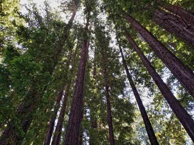 365 Henry Cowell Drive, Santa Cruz CA: http://media.crmls.org/mediaz/F0205E25-AA7C-4B20-98DB-34C1BEC05D93.jpg