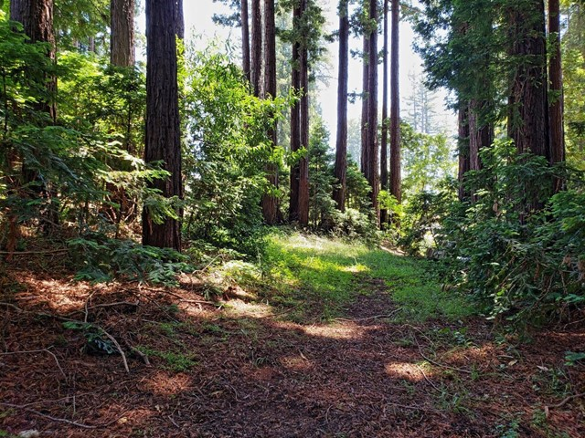 365 Henry Cowell Drive, Santa Cruz CA: http://media.crmls.org/mediaz/FA53B00E-B19B-4D0D-9A80-B58286E2E070.jpg