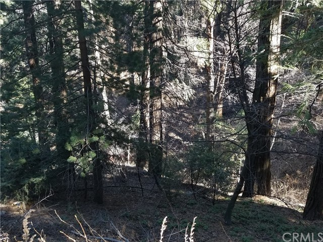 0 Burnt Mill Canyon Rd, Cedarpines Park, CA 92322