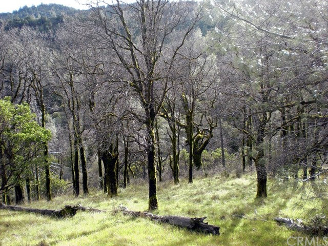 12515  Dry Creek Road