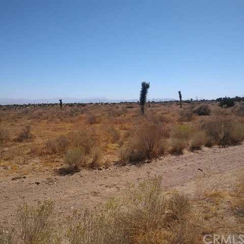 10611 Yucca Terrace Dr, Oak Hills, CA 92344 Photo 5