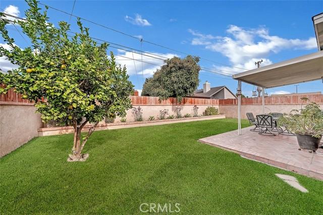 Large Backyard with Fruit Trees