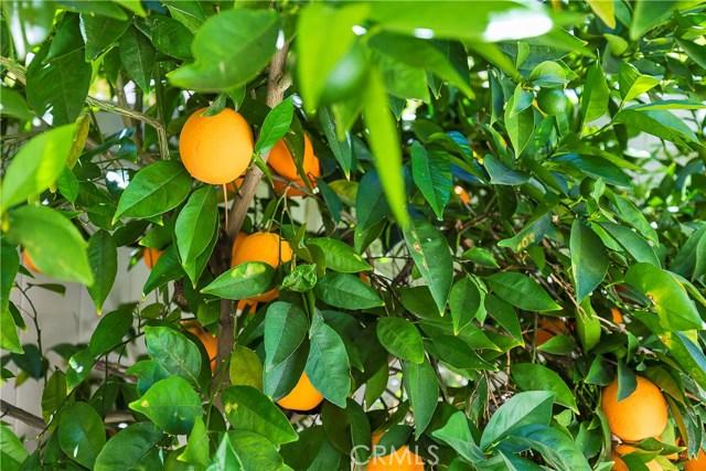 31772 Green Oak Wy, Temecula, CA 92592 Photo 20