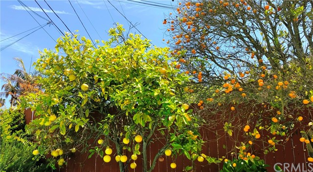 A closer look of the some of the fruit trees (apples, tangerines) You also have lemons, loquat and more.