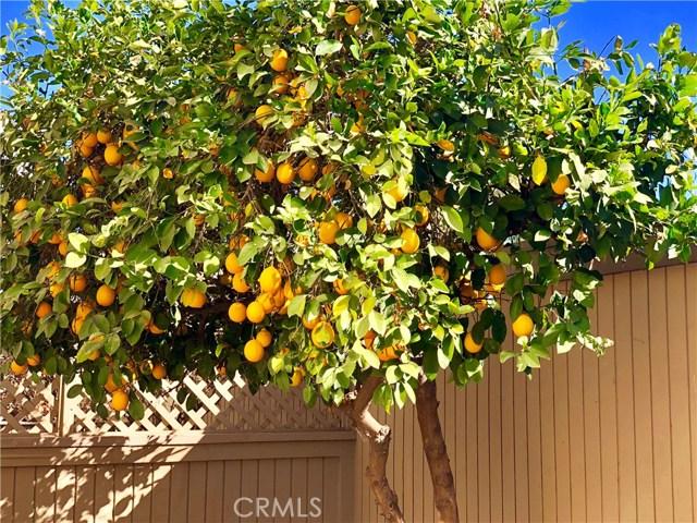 277 Rosemont Av, Pasadena, CA 91103 Photo 14