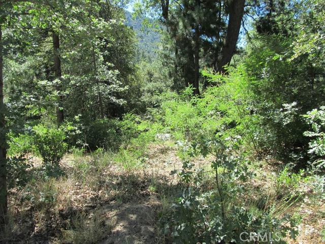0 TRIPP Lane, Angelus Oaks, CA 92305
