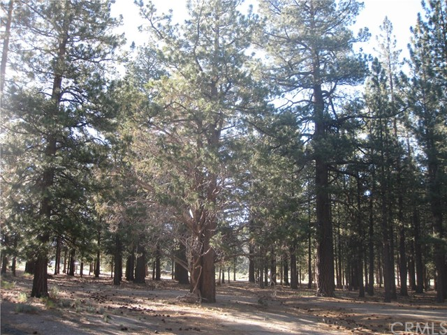 2818 Erwin Ranch Road, Big Bear, CA 92314
