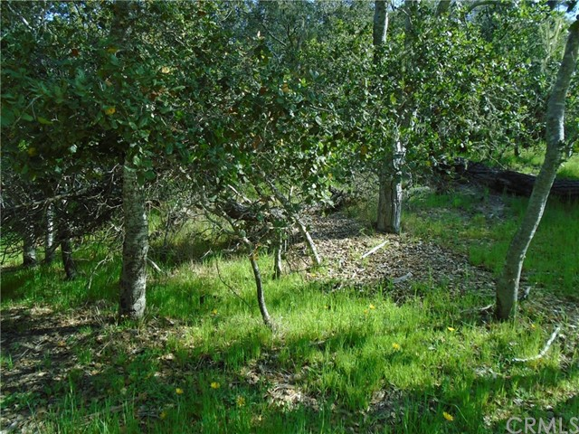 1880 Orville Av, Cambria, CA 93428 Photo 10