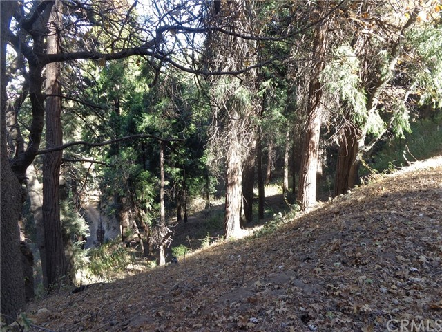 0 Cedar Pines Drive, Cedarpines Park, CA 92322