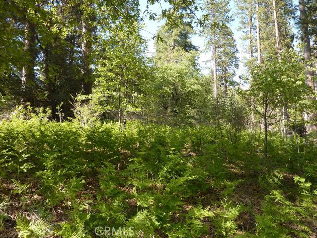 0 Mountain Creek Home Road, Angelus Oaks, CA 92305