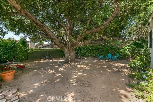 Rear Yard Oak Tree