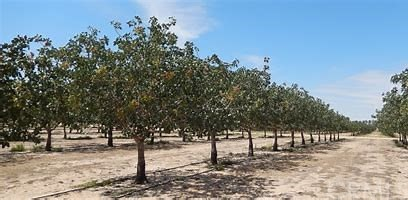 0 FWY 5, Lost Hills, CA 93249