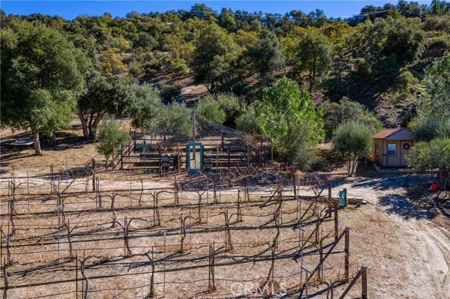 Wine vines near garden and storage shed