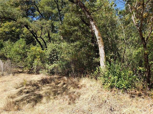 0 Blackberry, Forest Ranch, CA 95942 Photo 12
