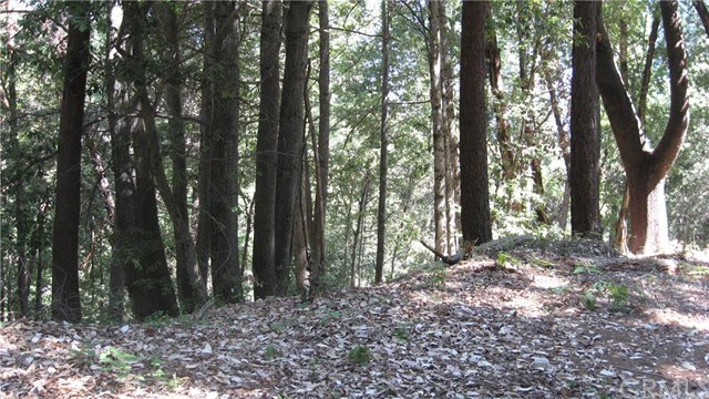 1 simpson ranch, Berry Creek, CA 95916