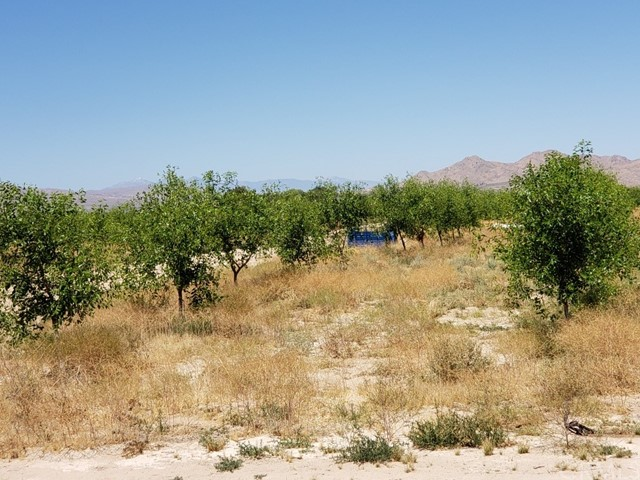 11599 Lincoln Rd, Lucerne Valley, CA 92356 Photo 2