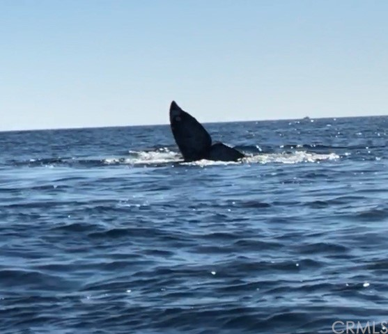 Dana Point is famous for Whale Watching!