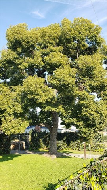 4382 San Bernardino Ct, Montclair, CA 91763 Photo 4