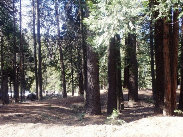 7174 Yosemite Park Way, Yosemite, CA 95389