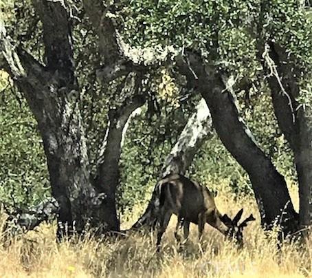 4265 Nickel Creek Rd, San Miguel, CA 93451 Photo 45