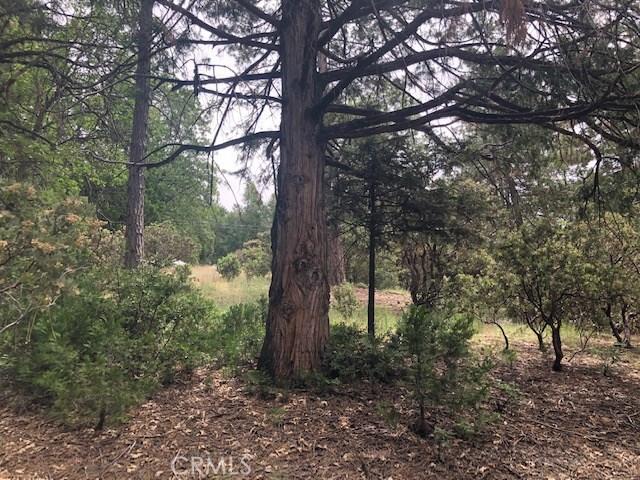 52575 Banning Idyllwild Road, Idyllwild, CA 92549