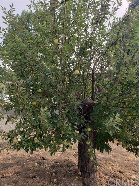6836 Lakewood Dr, Frazier Park, CA 93225 Photo 27