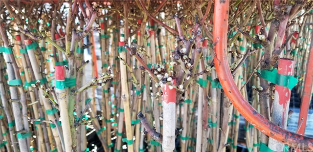 19998 Spruce Rd, Los Banos, CA 93635 Photo 1