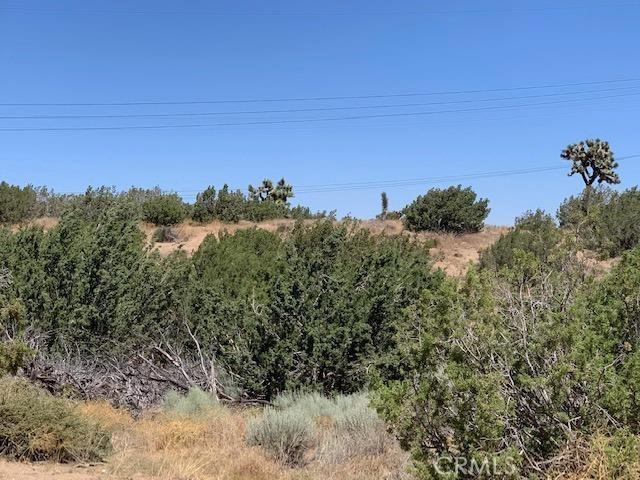 3 Daisy St, Oak Hills, CA 92344 Photo 5