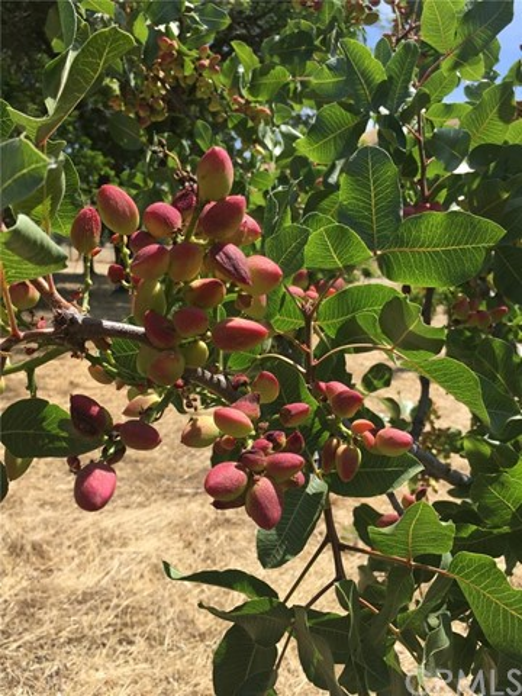 3470 Ranchita Cyn Rd, San Miguel, CA 93451 Photo 31