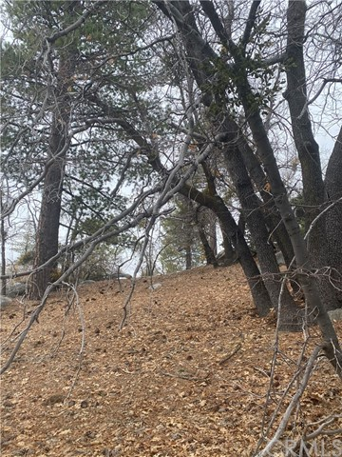 0 Forest Dr, Arrowbear, CA 92382 Photo 0