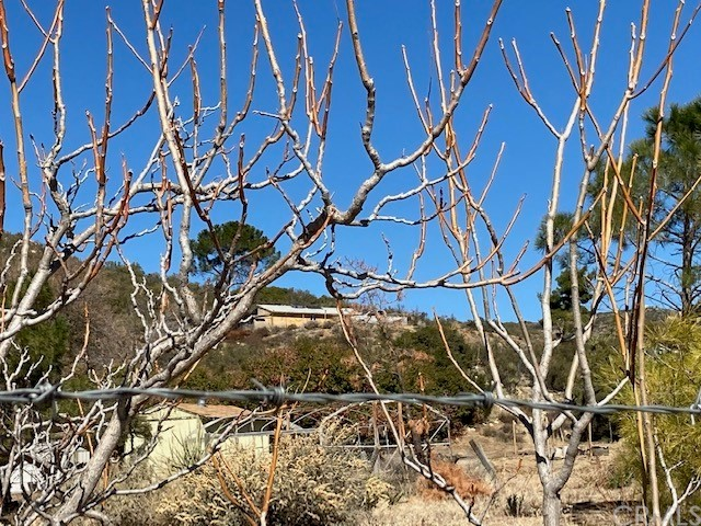 sloping land with native vegetation