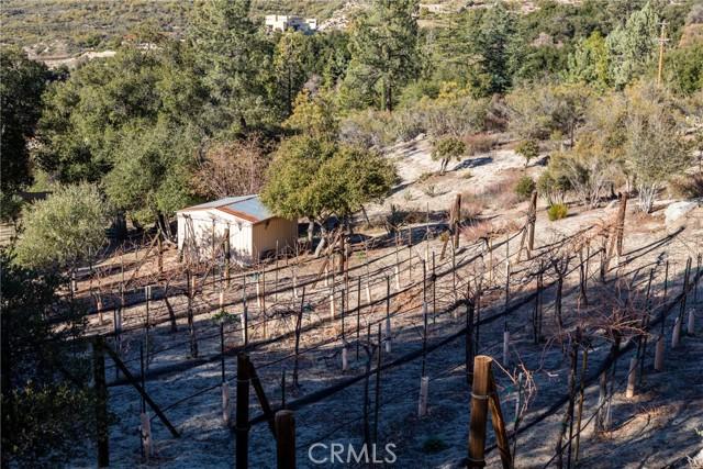 Vines near storage shed