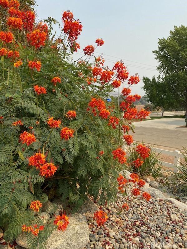 3809 Sourdough Rd, Acton, CA 93510 Photo 9