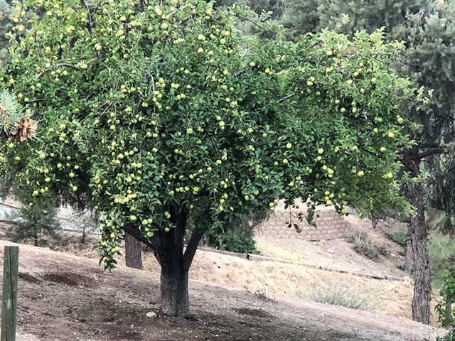 1405 Pinetree Dr, Frazier Park, CA 93225 Photo 29