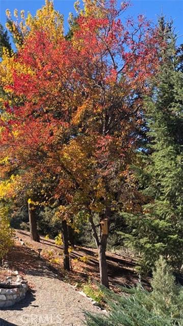 1405 Pinetree Dr, Frazier Park, CA 93225 Photo 30