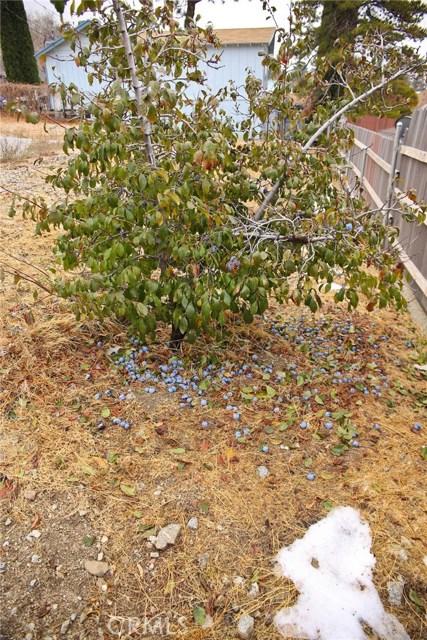 4200 Maple, Frazier Park, CA 93225 Photo 29