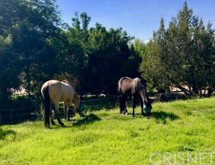31665 Indian Oak Rd, Acton, CA 93510 Photo 44
