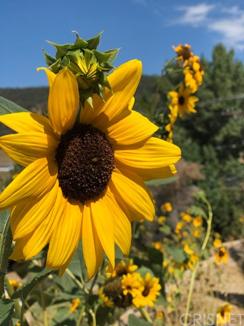 1405 Pinetree Dr, Frazier Park, CA 93225 Photo 40