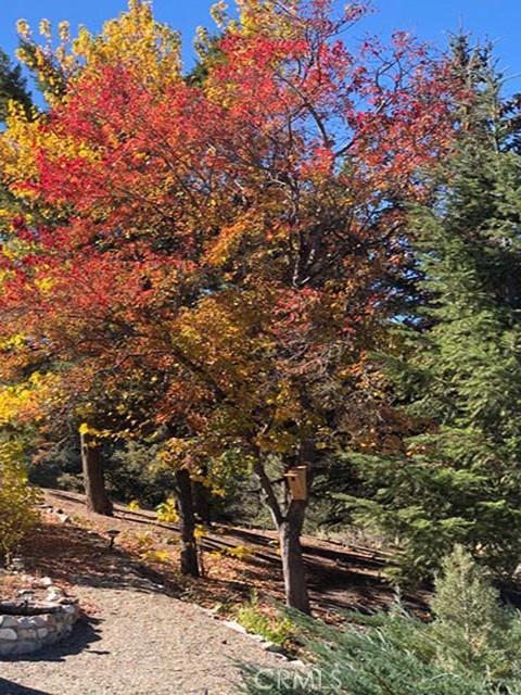 1405 Pinetree Dr, Frazier Park, CA 93225 Photo 31