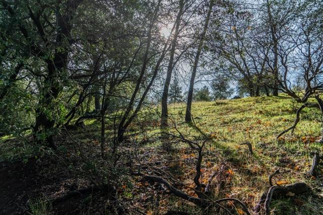 0 Pine Hills Rd., Julian, CA 92036