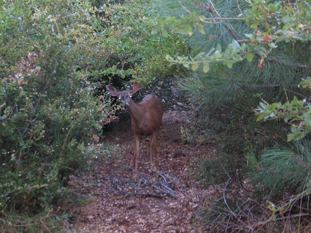 34664 Pima Trail, Julian, CA 92036