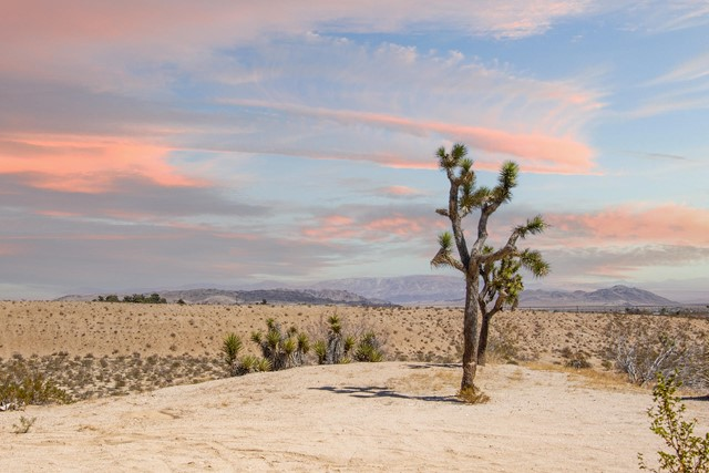 Image 6 of 388 Old Woman Springs Rd, Yucca Valley, CA 92284