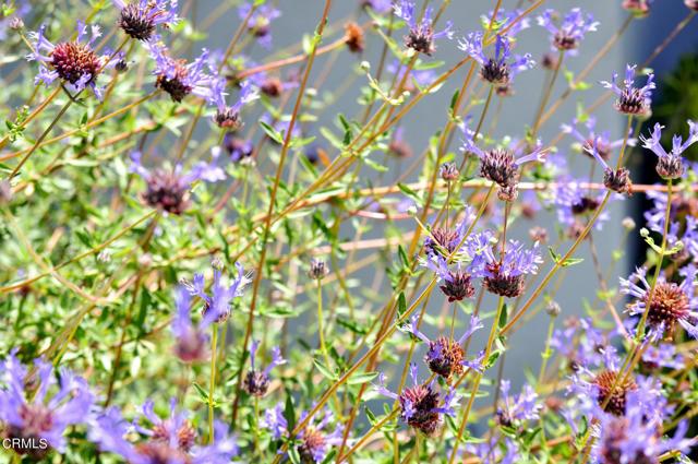 1524 N Grand Oaks Av, Pasadena, CA 91104 Photo 39