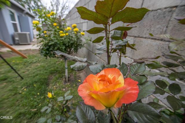 Roses_1231 Los Serenos