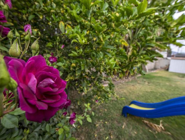 Roses 2_1231 Los Serenos