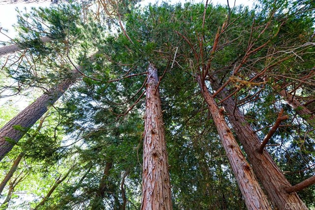 5965 Robin Oak Drive, Angelus Oaks, CA 92305 Photo 1